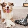C3 Cat&Dog PowerLine tolmuimeja, tumepunane